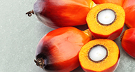 bypass fat for ruminants, bypass fat supplier, ruminant fat, dry fat